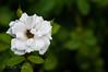 20160715-ZAS_9935 (zafarsami65) Tags: flowers abbottabad