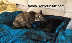 2016 - Esmeralda and Smokey for 07.27.16 post (Terre's Photos) Tags: smokeyandesmeralda thedancingcat catadoption picturesofcats catparents danceexercise terrepruitt niateacher niabluebelt cpt sanjosenia sanjoseniaclasses sanjoseexerciseclasses wwwhelpyouwellcom wwwterrepruittcom sanjoseniateacher piyo pilates yoga exercise workout sanjoseworkout niasanjose danceexerciseclass danceworkout cardiodance groupexclasses ymca nia niaclass niatechnique sjcityfit