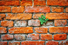 Intruder (Petr Horak) Tags: plant brick wall pattern outdoor hdr x100
