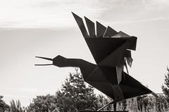 Nothing to flap about... (AJFpicturestore) Tags: sculpture bird monochrome blackwhite cornwall wing beak flap sqwark sculpturepark coverack southwestcoastalpath terencecoventry alanfoster cornishwalks