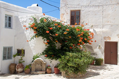Courtyard (Ania Mendrek) Tags: nature green plants pots courtyard cyclades summer holidays sea hot sun beach greece mediterranean island aegean cycladic culture greek mythology chora views landscape windmills waterfront architecture church orthodox white ancient naxos colours watching