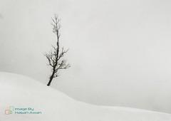 Alone (hasan_awan78) Tags: trekking travel trek nature snow wild wilderness alone valley landscape adventure pakistan musakamusala