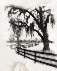 Ocala, Florida Horse Country (peppermcc) Tags: ocala florida horse fence watercolor fences spanishmoss