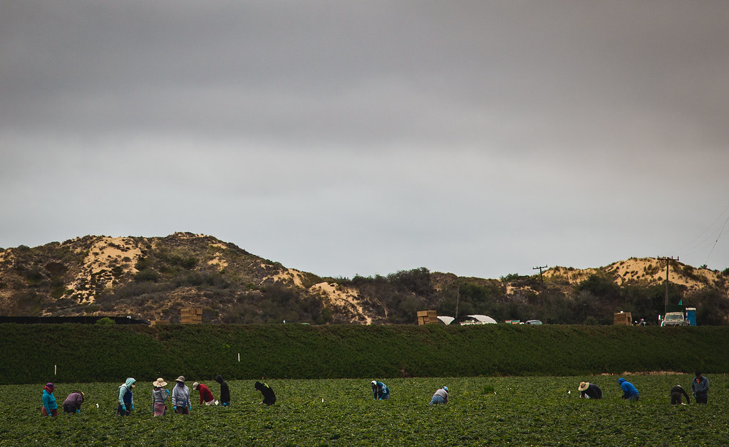 Nipomo Farm Workers by Tony Webster, on Flickr