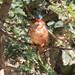 Bird of Zeway