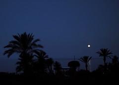 Full moon setting over Atlantic Ocean (mkk707) Tags: sigmafoveonstyle sigmadp2merrill foveonx3 pointshoot fullmoon atlantic madeira ocean palmtrees