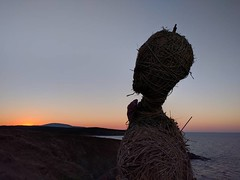 Scarecrow (lunat1k) Tags: instagramapp square squareformat iphoneography uploaded:by=instagram sunset sea lookingback bythesea sinemorets bulgaria nexus5x nature sculpture art portrait colors strawman scarecrow outdoor blacksea