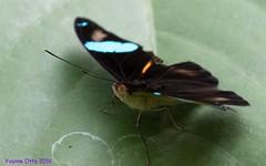K46A8009 (Yvonne23021984) Tags: schmetterling butterfly hamm germany deutschland maxipark markro photography macrophotography canon canonphotography markofotografy canoneos7dmarkii insects insekten nature naturfotografie naturephotography closeup colorkey schmetterlinge butterflies