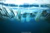 IMG_3991 copy (Aaron Lynton) Tags: makena big beach wave waves barrel bigbeach lyntonproductions canon 7d 580exii hawaii
