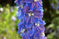 NYBG_139 (chiang_benjamin) Tags: nybg newyorkbotanicalgarden ny nyc bronx newyorkcity flowers trees arboretum plants green nature summer monetexhibit impressionism