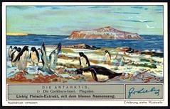 Liebig Tradecard S1328 - Cockburn Island (cigcardpix) Tags: tradecards advertising ephemera vintage liebig