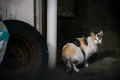 (SUDAYAMA) Tags:  cat limelight   back street