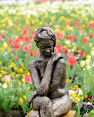 Floriade 2016 Canberra (tree.twisted) Tags: floriade canberra 2016 flowers flowershow spring statue nikon50mmf14
