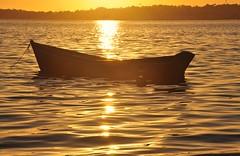 mergulhado em ouro (Ruby Ferreira ) Tags: araruamarj ripples ondulaes regiodoslagos lagoon lagoadeararruama sunset prdosol boat barco forest floresta