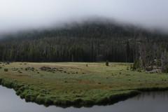 East Inlet (Tony Pulokas) Tags: eastinlet rockymountainnationalpark colorado tree tilt blur bokeh grandlake pine lodgepolepine fog meadow creek stream reflection summer