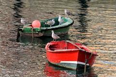(Enllasez - Enric LLa) Tags: barcas gaviotas lekeitio urdaibai mar 2016