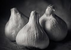 garlic, yeah! - 274/366 (auntneecey) Tags: 366the2016edition 3662016 day274366 30sep16 texture garlicyeah photoshop macro mono monochrome