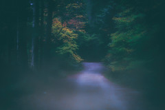 twin bridges (c.turzak...) Tags: autumn twinbridges lowerseymour forest dusk 50mm canon nik lightroom northvancouver trees bc westcoast canada