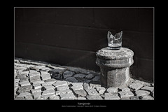 hangover (Armitage77) Tags: hangover kater broken glas zerbrochenes sliver splitter pavement fusweg black white schwarz weiss sun sonne shadow schatten berlin friedrichshain tonemapping hdr canon eos 5dmarkii