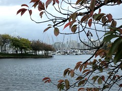 Storm tide at Granville Island (Ruth and Dave) Tags: granvilleisland falsecreek seawall vancouver hightide storm stormsurge highwater harbour inlet marina yahcts tree branch autumn framed weather weatherphotography