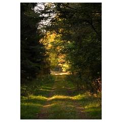 Herbstliches Wochenende (Nikonfotografie) Tags: nikonofficials nikonlove landscape landschaft wege wald wrme licht autumn herbst natur niedersachsen meinnorden