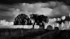 trees and a track (barneymcgrew) Tags: blackandwhite mono trees wobble icm