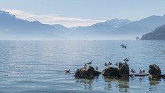 Cold Lake (Thomas DARTIGUES) Tags: lake snow blue water frog nikon tamron 24 70 28 outdor landscape