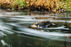 Swirling water (alohadave) Tags: braintree massachusetts monatiquotriver norfolkcounty northamerica overcast pentaxk5 places river sky unitedstates water smcpda1650mmf28edalifsdm