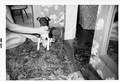 Penny The Dog (neshachan) Tags: family familyphotos penny dog furniture