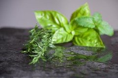 Summer Savory (The Good Brat) Tags: co us herb garden summersavory basil peppermint slate summer wet harvest stilllife green gray trio