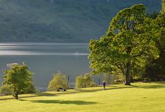 Morning at the Lomond (Dalis.V) Tags: lomond scotland lake water tree morning grass green lochlomond