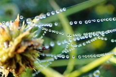 Droplets (bether) Tags: cuyahogavalley cuyahogavalleynationalpark beavermarsh ohio nationalpark 2016centennial findyourpark getoutside outdoors takeahike morningdew spiderweb web