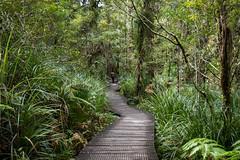 Waipuoa Forest-3-2