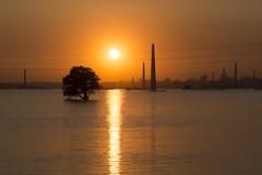 Sunset bonanza (haqiqimeraat) Tags: ashulia dhaka bangladesh sunset 2485 nikon d7100 scenery scenic colours tree