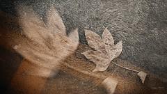 Tracce d'autunno, nel parcheggio sotto casa (Angelo Trapani) Tags: autumn colori stagione foglie asfalto parcheggio palermo vento tracce atmosfera autunno strada street