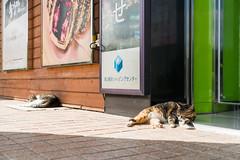 (iam543) Tags: sonya7rii sonyalpha7rii sonyilce7rm2 korea busan yongdusanpark  cat