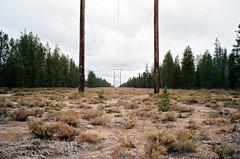 Phone lines (Dunstan) Tags: 959 film portra bessar 3a voightlnder kodak 400 color 35mm