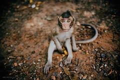 Mi expresion cuando vuelvo a la rutina :P (RoxiRosita) Tags: cambodia camboya travel mono animal nature monkey wanderlust film love look