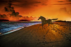 Wild Horse on the Wild Beach (Rusty Russ) Tags: hue eyes air crazy google pixel blue colorful day streetart digital graffiti europe mer lago window flickr country landschaft mare analog bright happy la paysage colour eos scenic america cielo market hill world sunset beach water sky flower red nature night white tree green art light sun cloud park landscape summer city yellow people pink house old new photoshop sandy point plum island ma