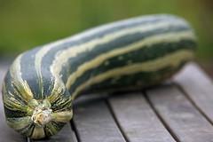 Rader av rnder (PiaLiz) Tags: fs161016 rad fotosondag squash zucchini