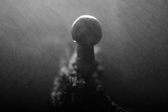 Rainy Mushroom (Miles Gilbert) Tags: bark wood flash sidelight water rain spray lighting black lowkey highlights shadows white brown alevel backlight