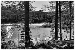 Brume matinale (sosivov) Tags: sweden landscape forest lake mist blackandwhite monochrome