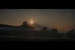 eye (r_if) Tags: olympusep1 lumix20mm17 sun morning sunshine