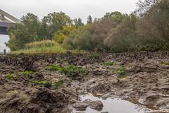 Eiland van Brienenoord (dorsman1970) Tags: brienenoordeiland delta landschap maas natuur rotterdam modder rivier