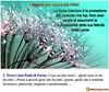 1° Segreto per essere più felici (marco.venturi1) Tags: felicità facoltà forza fiori frase aforisma felice