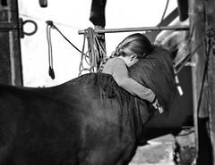 Love - Amour - Liebe (One-Basic-Of-Art) Tags: horse pferd eisen glck goodluck schwarzundweis schwarz weis weiss blackandwhite black white noiretblanc noir blanc photography fotografie 1basicofart annewoyand anne woyand onebasicofart zufriedenheit kuscheln tierliebe liebe amour aimer love gefhle emotion