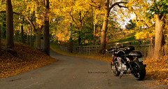 Pelham Twisties (Richard-7) Tags: norton canada shorthills pelham fonthill ontario motorcycle fall autumn bike image colorful clean roads twisties caferacer commando 961 se specialedition naked