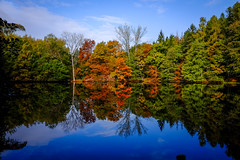 (Petr Havek) Tags: landscape autmn fall forrest pond trees colours water lake mirror nature reflection outdoor czech fujifilm