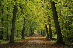 Leaves tunnel (Elbmaedchen) Tags: wald forest herbststimmung autumn oktober sachsenwald bume trees spazierweg walk nature natur