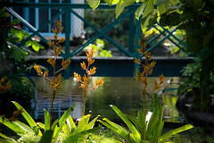 so peaceful here (-gregg-) Tags: garden flowers sunlight water bridge quiet peaceful